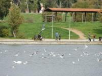 Σωρεία οικονομικών και περιβαλλοντικών αυθαιρεσιών υπέρ ιδιωτικών συμφερόντων στο Πάρκο Τρίτση