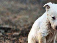 Η μέριμνα και η φροντίδα των ζώων είναι ένδειξη του πολιτισμού μας