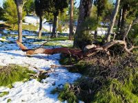 Δεκάδες σπασμένα κλαδιά και δέντρα στο Πάρκο Τρίτση από την κακοκαιρία – Κίνδυνος για την σωματική ακεραιότητα των επισκεπτών στον χώρο – Απούσα η Διοίκηση