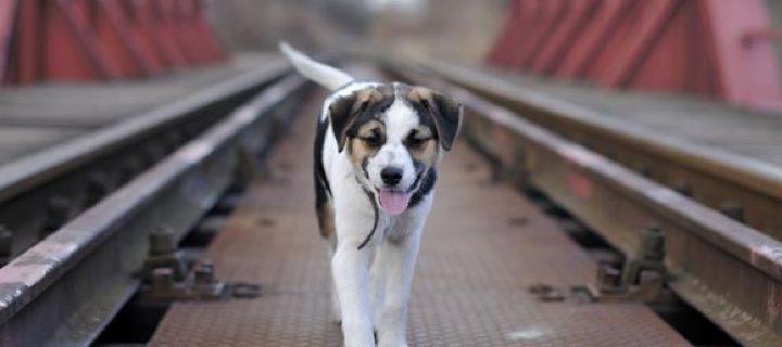 Κονδύλι 600.000 ευρώ στην Τοπική Αυτοδιοίκηση για την ενίσχυση των καταφυγίων αδέσποτων ζώων